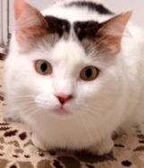 My spirit cat